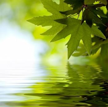 5ml Naturreine, ätherische Ölmischung Cleanse