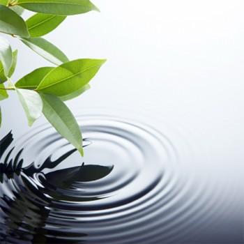 10ml Naturreine, ätherische Ölmischung Purity